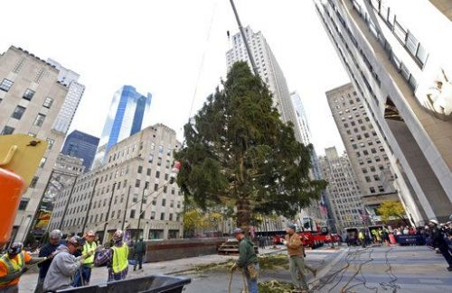 New York City's Rockefeller Center Christmas tree goes up
