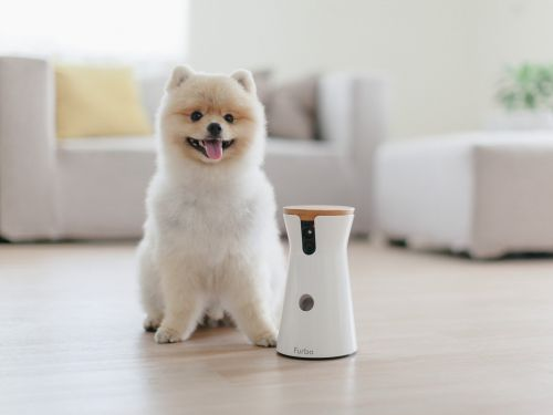 We tried the Furbo dog camera that lets you monitor and talk to your pet from afar - here's what it's like to use