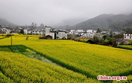 Beautiful spring scene - Wuyuan