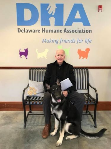 Former Vice President Joe Biden, wife adopt rescue dog named Major
