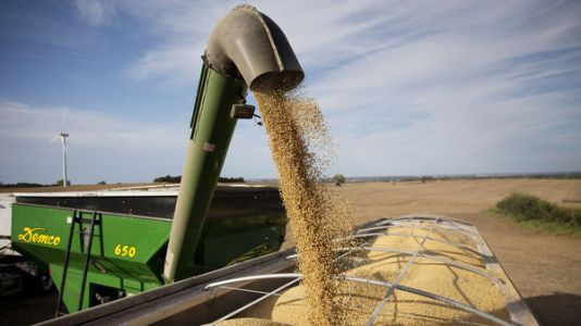 Caught Between Trump's Tariffs And Tax Changes, Soybean Farmers Face Uncertain Future