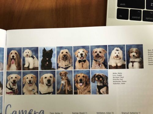 Parkland's Marjory Stoneman Douglas yearbook features therapy dogs