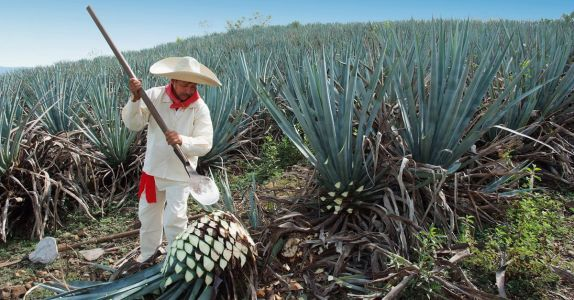 Mexican Tequila Regulators Not A Fan Of Elon Musk's 'Teslaquila'