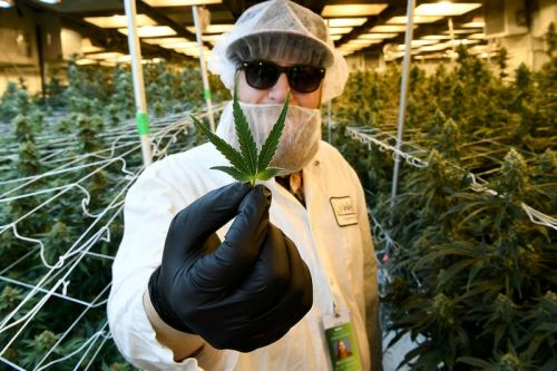 UN Commission No Longer Considers Cannabis One of the Most Dangerous Drugs