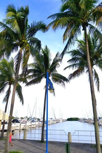 24 Hours in Miami - A Neighborhood Experience in Coconut Grove