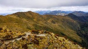 Walking in Nature: Paparoa Track, a World of its Own