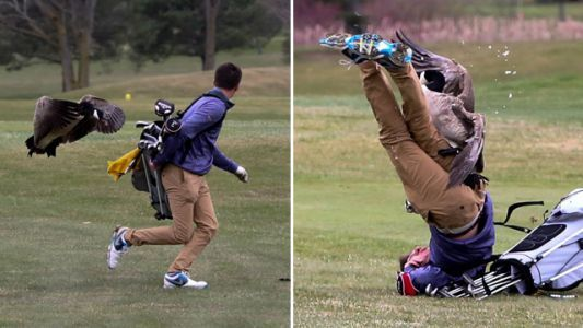 Incredible photos show high school golfer taken down by angry goose