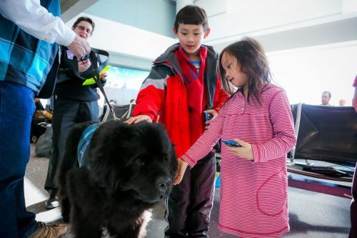 The unregulated world of 'emotional support animals' is driving airlines crazy - and science is on their side