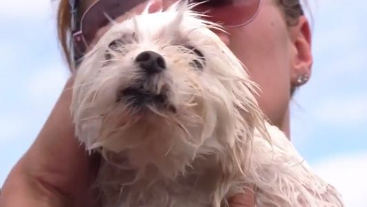 'It's amazing she's alive': Humane society rescues dog trapped for days in Florence floodwaters