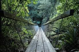 Canopy walk at Kuveshi forest will be opened to tourists