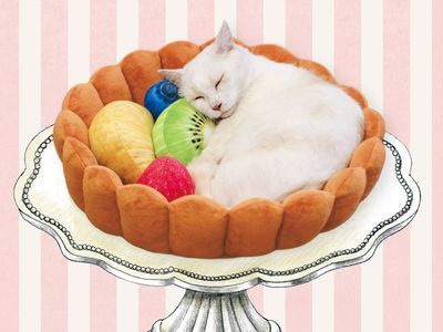 This Cat Bed Is a Giant Fruit Tart