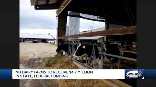 New Hampshire dairy farms to receive $4.7 million in state, federal funding