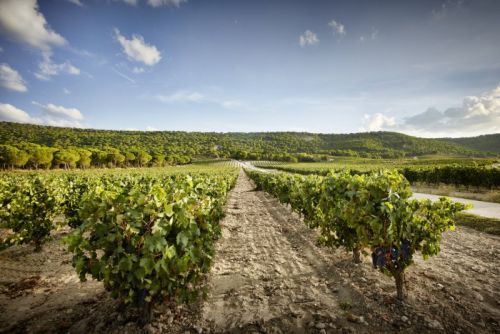 Everything You Need To Know About Spain's Ribera del Duero Region