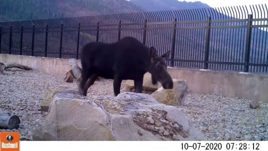 'It's working!': Officials thrilled to see animals using highway wildlife overpass in Utah