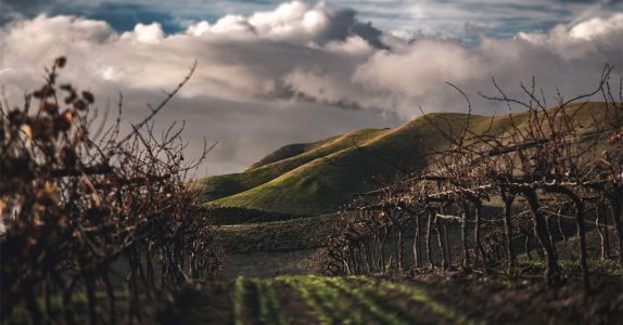 A National Look at How American Wineries Are Weathering the Covid-19 Pandemic