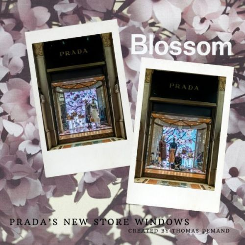 Blossom: Prada's New Store Windows