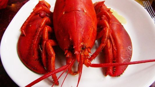 State puts brakes on restaurant that wanted to sedate lobsters with pot