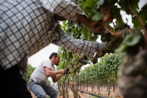 New Documentary Shines Light on Latinx Winemakers in Sonoma and Napa Valley