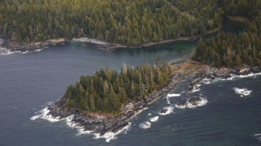 Trump Administration Moves To Allow Logging In Alaska's Tongass National Forest