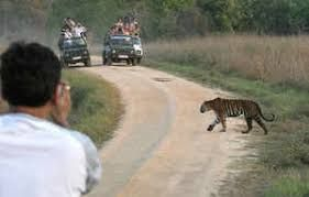 Bar on children & senior citizens impact visitor footfall in tiger reserves