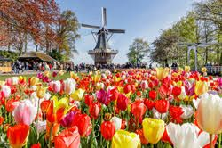 Floral Travel Blooms: Tour Operators Spotlight Colorful Itineraries