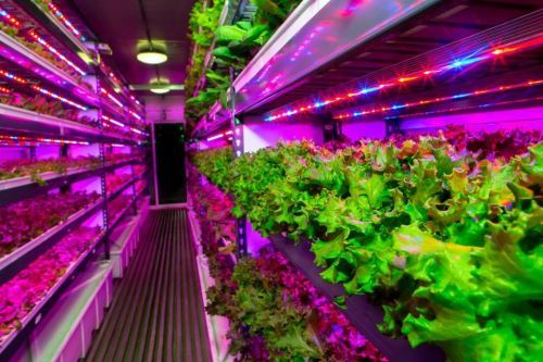 Dubai is getting the world's largest vertical farm - and it will grow produce for the world's largest international airport