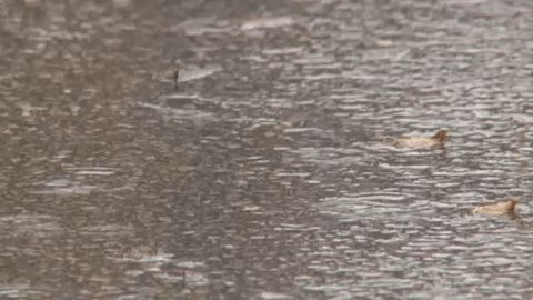 Monday rainfall shatters Wisconsin all-time record
