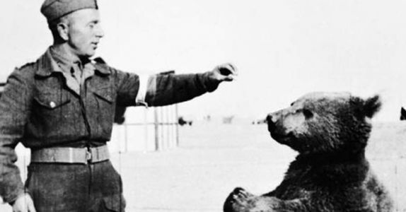 The Bear Who Drank Beer, Smoked Cigarettes, and Became an Unlikely War Hero