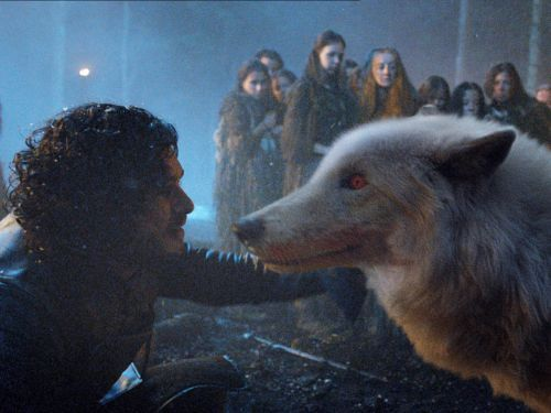 'Game of Thrones' finally gave Ghost his due and fans don't care about anything else