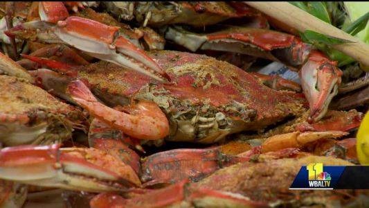 Baltimore Magazine goes to the crabs!