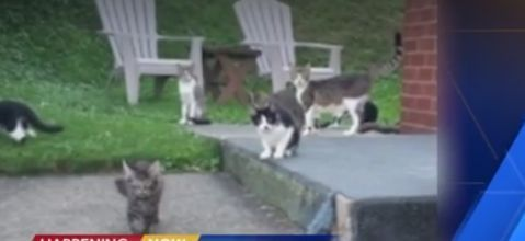 Cat controversy: Woman says she was threatened with fine, jail time for helping feral cats