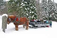 Tourism in NE China village gets a boost from horse-drawn sleigh rides