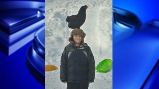 11-year-old Massachusetts boy and his sledding chicken go viral