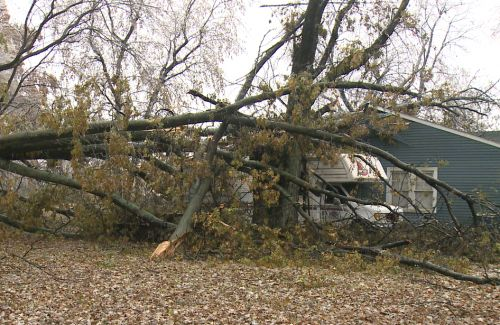 Tree falls on Highview home during ice storm