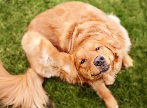 FDA issues alert on certain flea, tick medications; says they could cause adverse nerve reactions