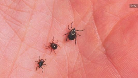 It's official: Lyme disease is now in all 50 states