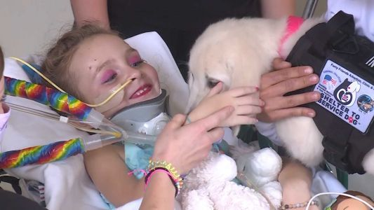 Girl paralyzed after car accident meets new 'furrever friend'