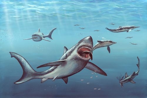 Great white sharks may have killed off titanic ancient megalodon