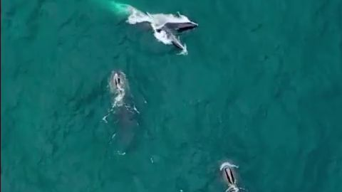 VIDEO: Whales spotted off New England coast