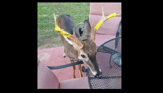 'Please don't shoot George the deer' post goes viral