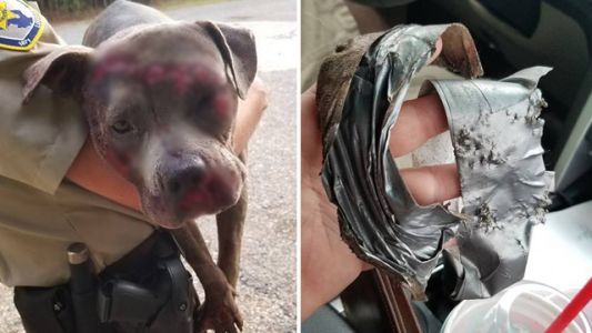 Dog with legs duct-taped together thrown onto interstate, dragged by cars