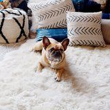 This Is the 1 Thing Hotel Owners Wish You'd Do When You Travel With Your Dog