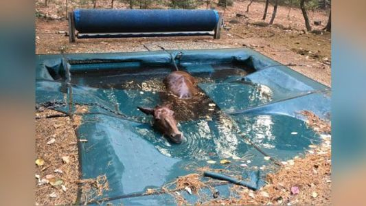 Horse found 'shivering uncontrollably' after surviving wildfire in swimming pool