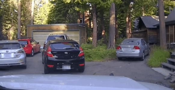 Bear Gets Stuck in Car That Somehow Isn't a Subaru