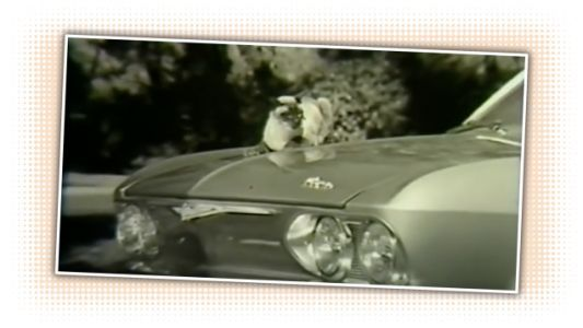 Chevy Once Used the Power of Cat Videos to Sell Corvairs