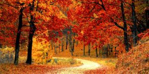 The Best Way to Plan Your Fall Foliage Tour this Autumn