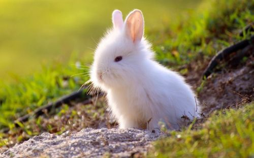 China moves away from mandatory animal testing for cosmetics