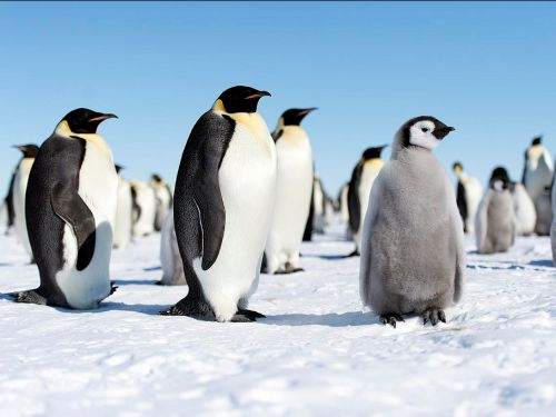 23 fascinating things you never knew about penguins