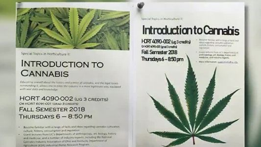 'Intro to Cannabis' course available at University of Cincinnati this fall