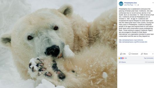 37-year-old Coldilocks, the oldest captive polar bear in the US, dies in Pennsylvania